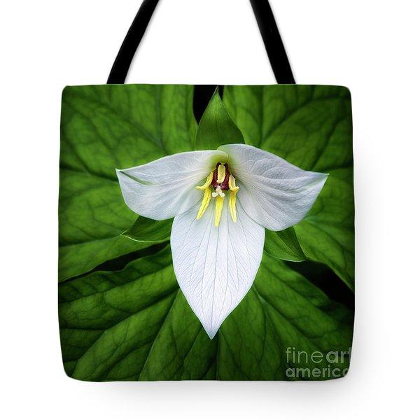 white trillium along Laurel Creek Road Tote Bag by Madonna Martin