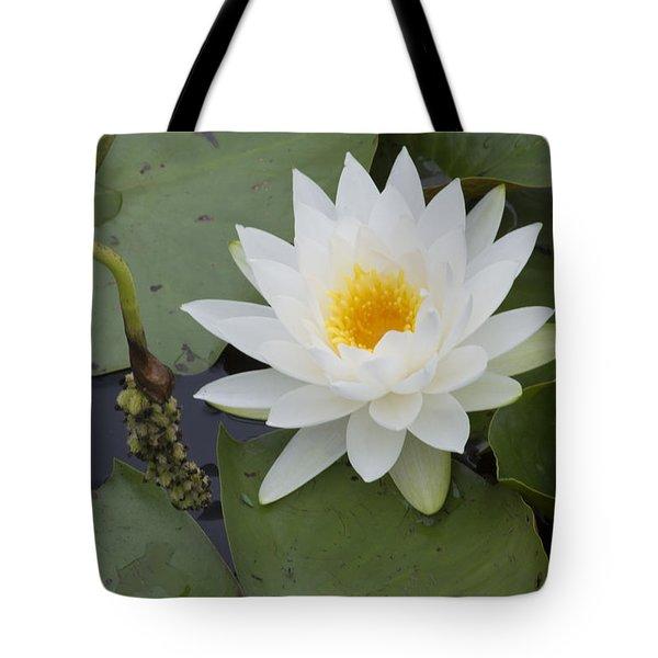 White Waterlily Tote Bag by Linda Geiger