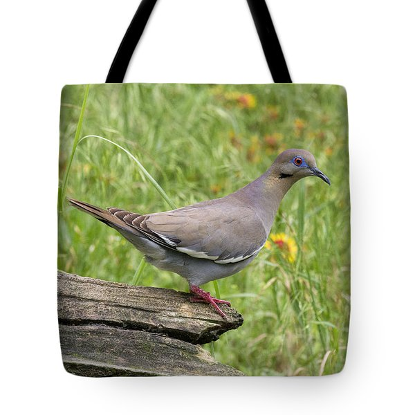 White-winged Dove Tote Bag
