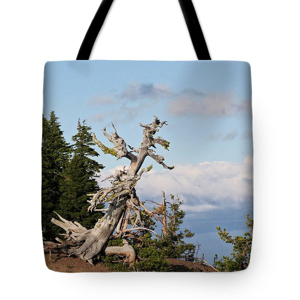 Whitebark Pine At Crater Lake's Rim - Oregon Tote Bag by Christine Till
