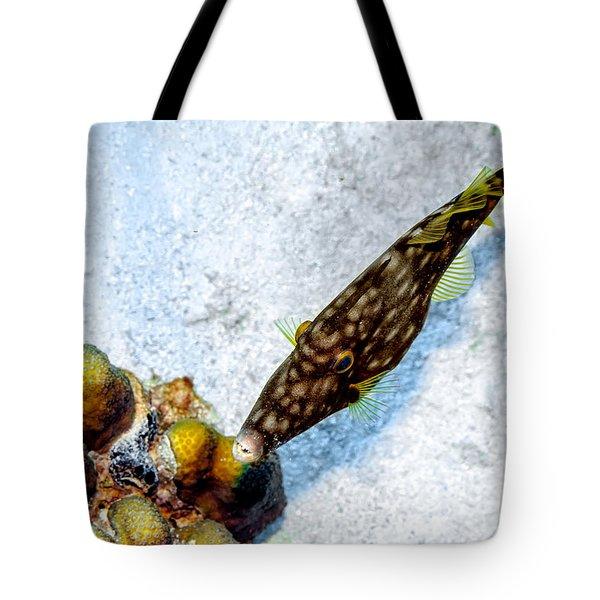 Whitespotted Filefish Tote Bag