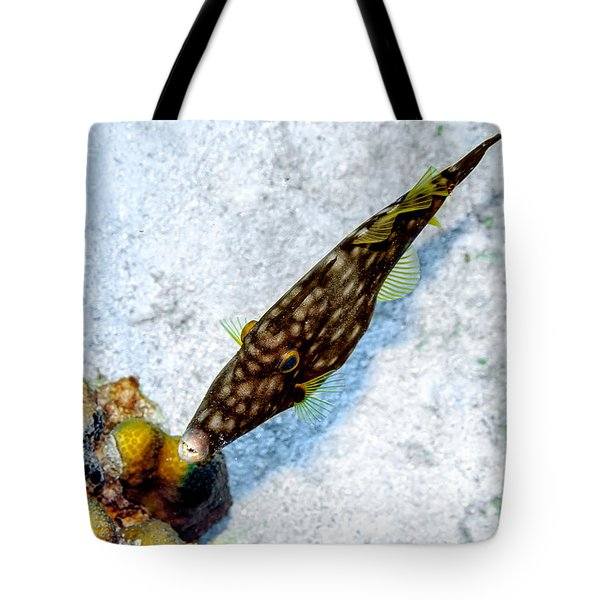 Tote Bag featuring the photograph Whitespotted Filefish by Perla Copernik
