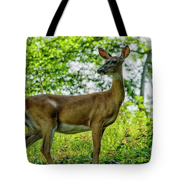 Tote Bag featuring the photograph Whitetail Deer  by Thomas R Fletcher
