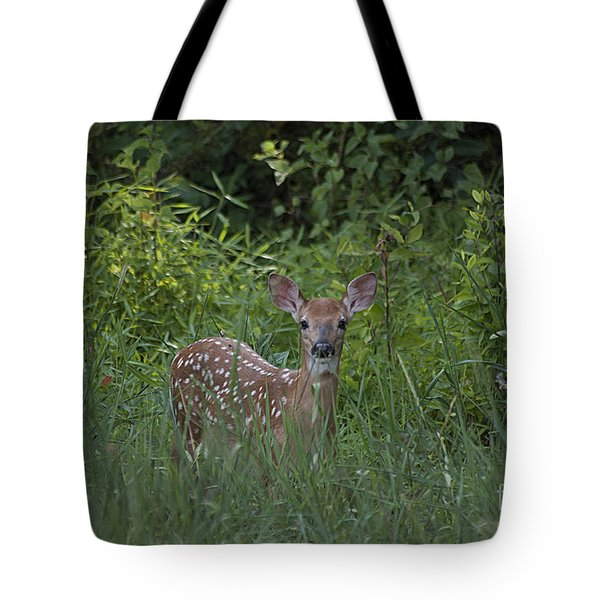 Whitetail Fawn 20120711_37a Tote Bag by Tina Hopkins