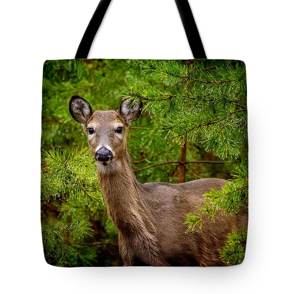 Whitetail In The Pines Tote Bag