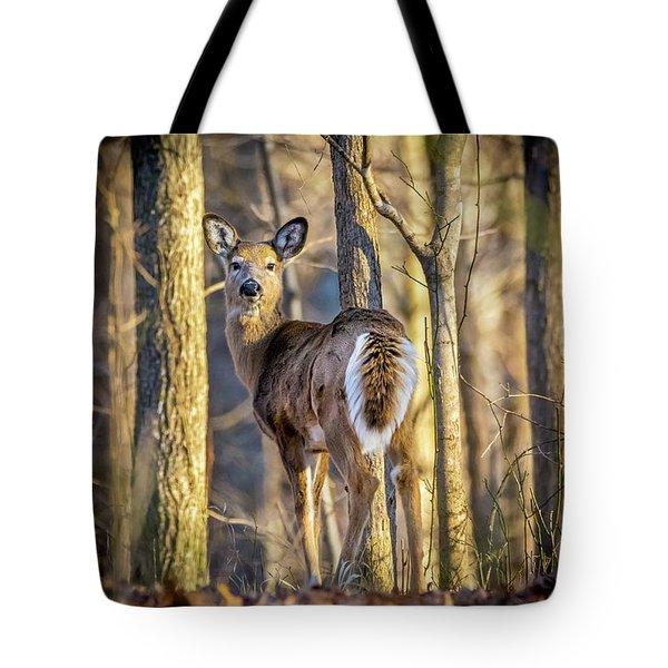 Whitetail Winter Morning Tote Bag