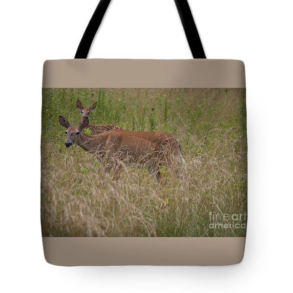 Whitetail With Fawn 20120707_09a Tote Bag by Tina Hopkins