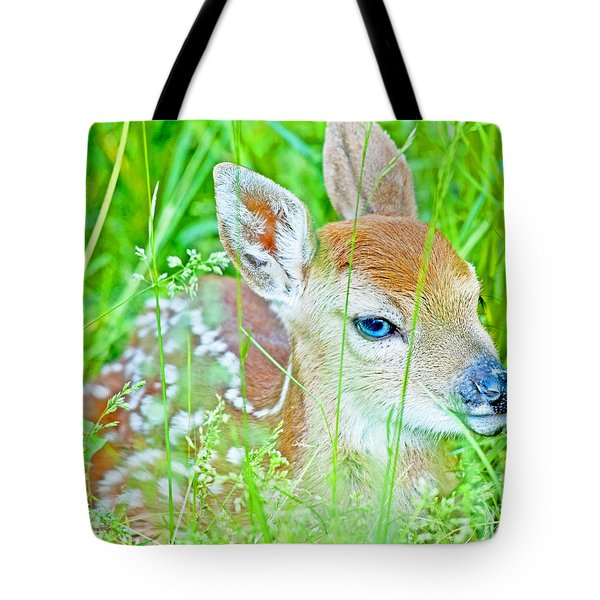 Tote Bag featuring the photograph Whitetailed Deer Fawn by A Gurmankin