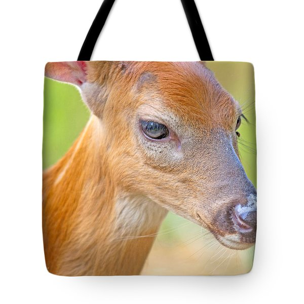 Tote Bag featuring the photograph Whitetailed Deer Fawn Portrait by A Gurmankin