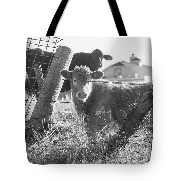 Tote Bag featuring the photograph Who Are You, Angus Cows Seem To Ask by Toni Hopper