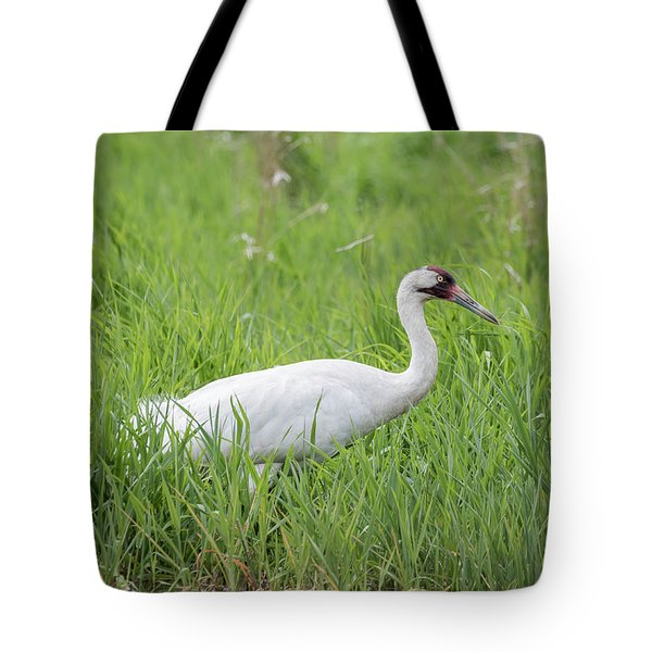 Whooping Crane 2017-2 Tote Bag by Thomas Young