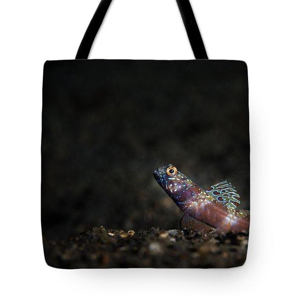 Wide-barred Shrimp Goby Tote Bag