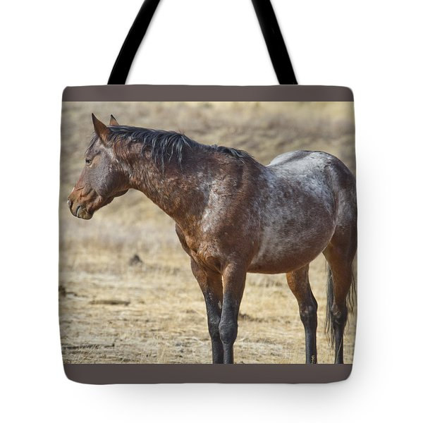 Wild Appaloosa Mustang Stallion Tote Bag