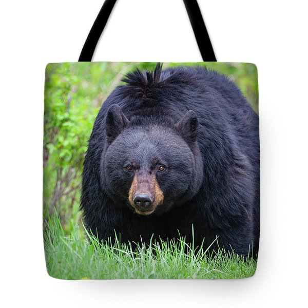 Wild Black Bear Tote Bag