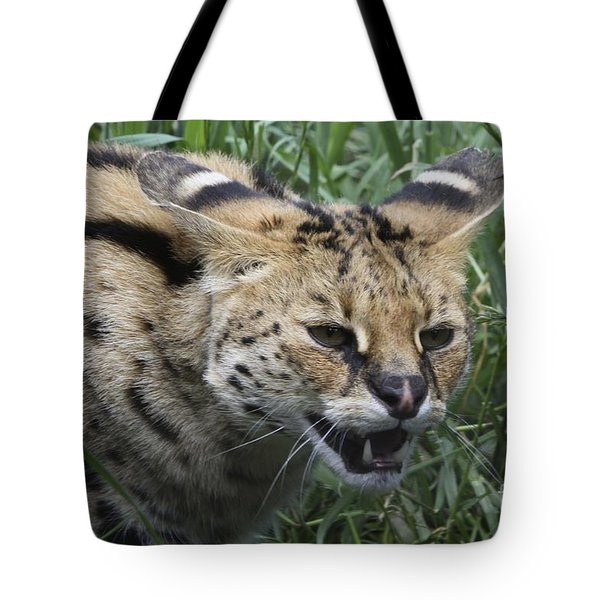 Wild Cat Tote Bag
