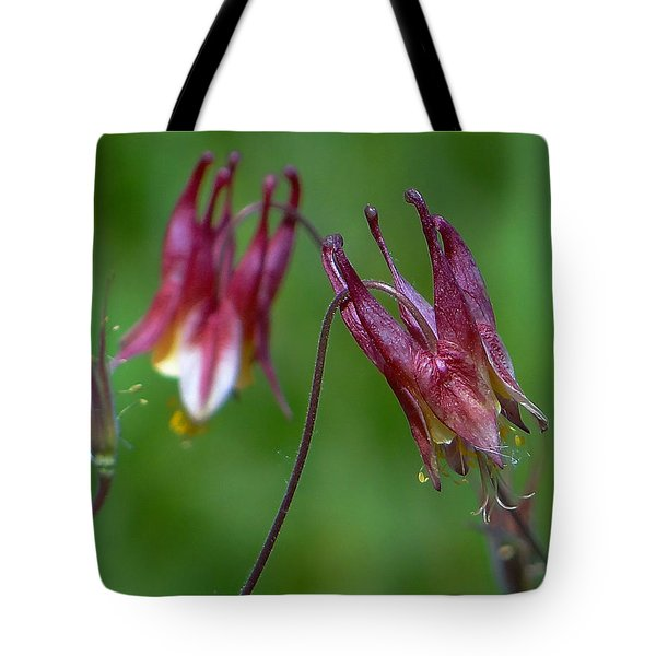 Tote Bag featuring the photograph Wild Columbine - Aquilegia Canadensis by Blair Wainman