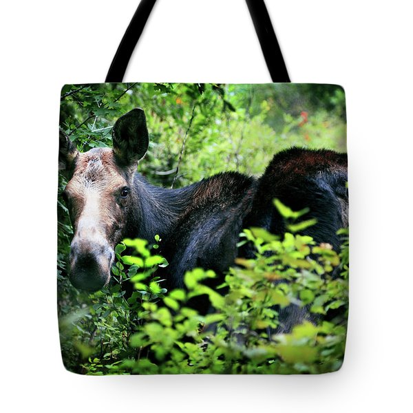 Wild Moose Tote Bag by Dan Pearce