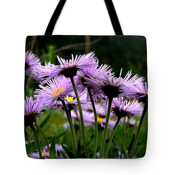 Wild Mountain Asters Tote Bag