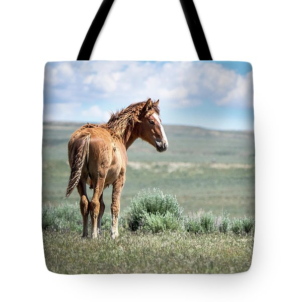 Wild Mustang Colt Of Sand Wash Basin Tote Bag