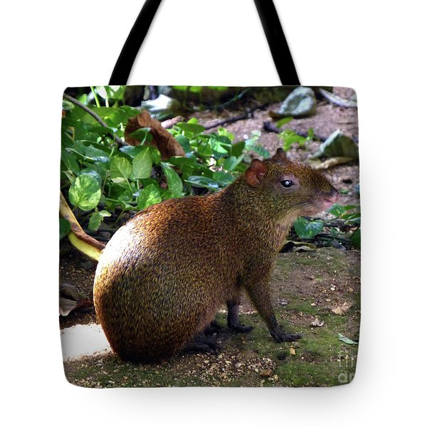 Tote Bag featuring the photograph Wild Rodent  by Francesca Mackenney