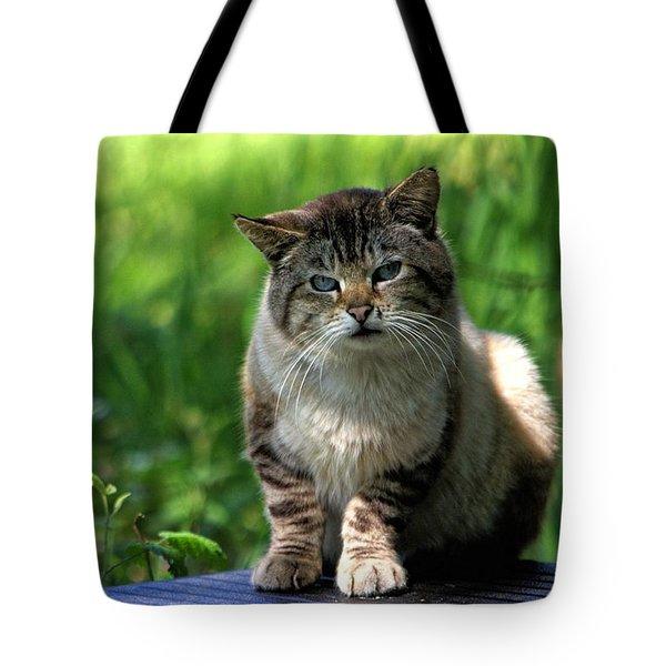 Wild Siamese Tote Bag