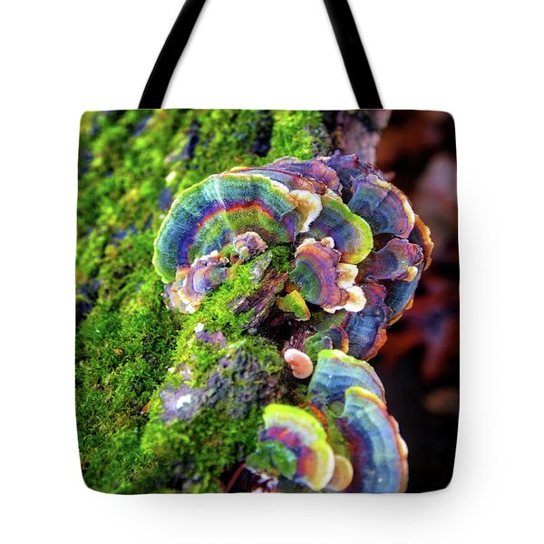 Wild Striped Mushroom Growing On Tree - Paradise Springs - Kettle Moraine State Forest Tote Bag by Jennifer Rondinelli Reilly - Fine Art Photography