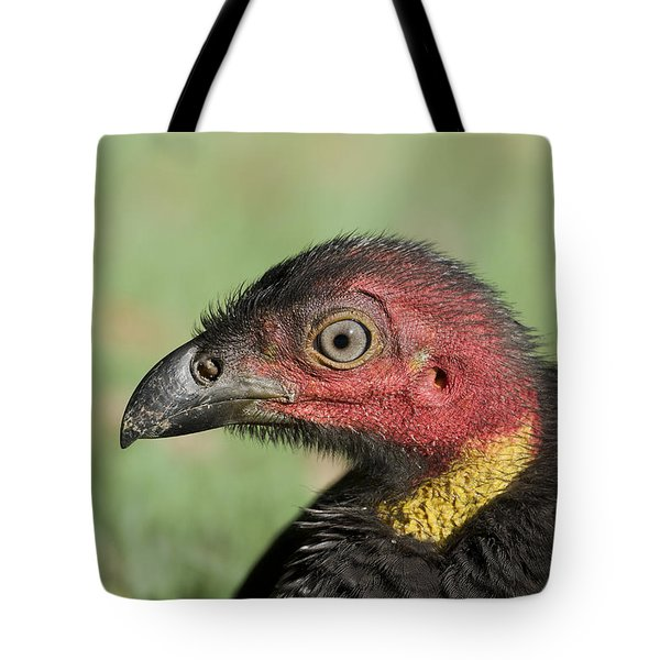 Tote Bag featuring the photograph Wild Turkey 01 by Kevin Chippindall
