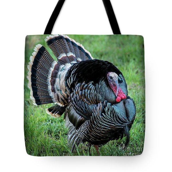 Wild Turkey - Capitol Reef National Park - Utah Tote Bag by Gary Whitton