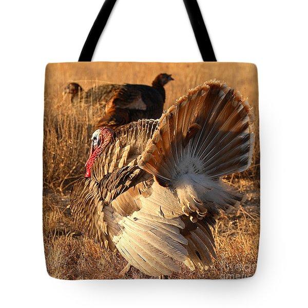 Wild Turkey Tom Following Hens Tote Bag