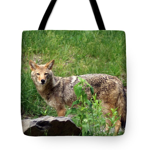 Wiley Coyote Tote Bag by Marty Koch