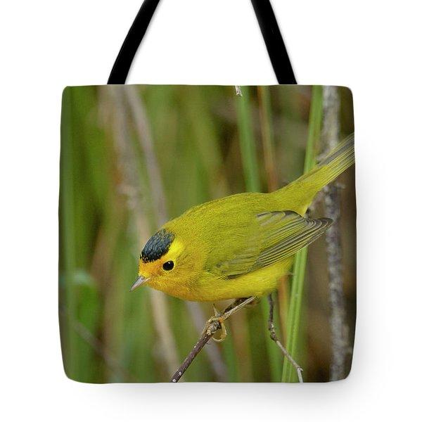 Wilson's Warbler Tote Bag by Doug Herr