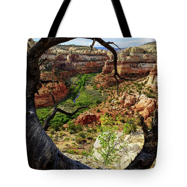 Tote Bag featuring the photograph Window by Chad Dutson