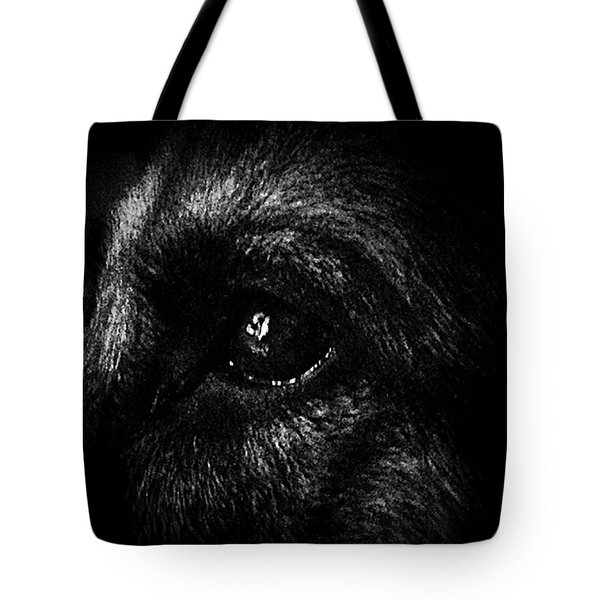 Window Light Reflection Tote Bag