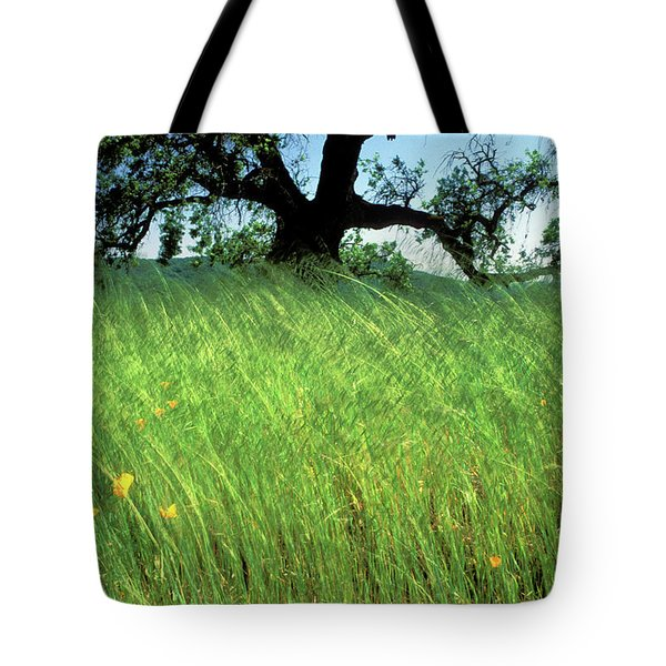 Windswept Poppies Tote Bag by Kathy Yates