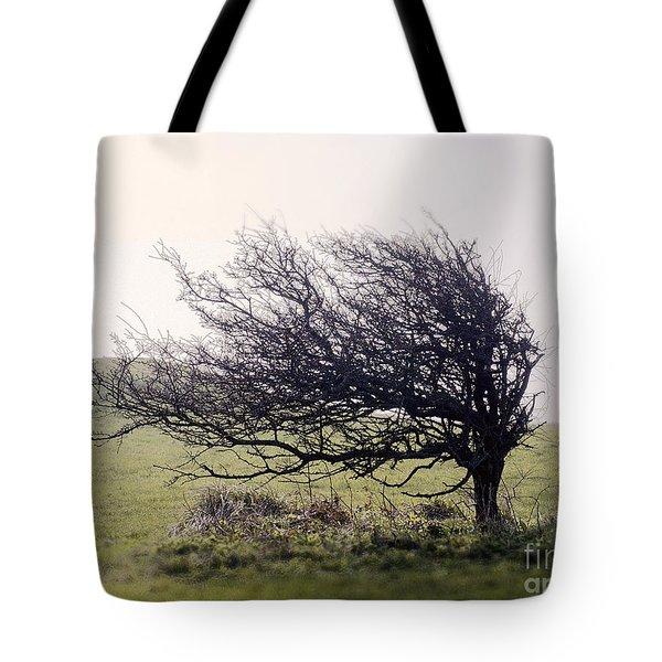 Windswept Tree Tote Bag