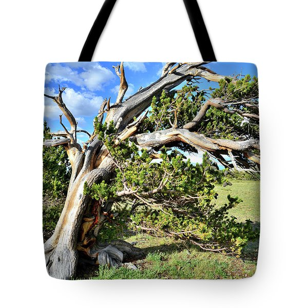 Windy Ridge Bristlecones Tote Bag