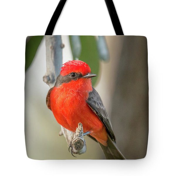 Winged Zorro Tote Bag