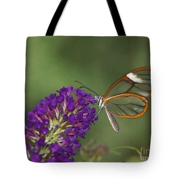 Wings Like Glass Tote Bag
