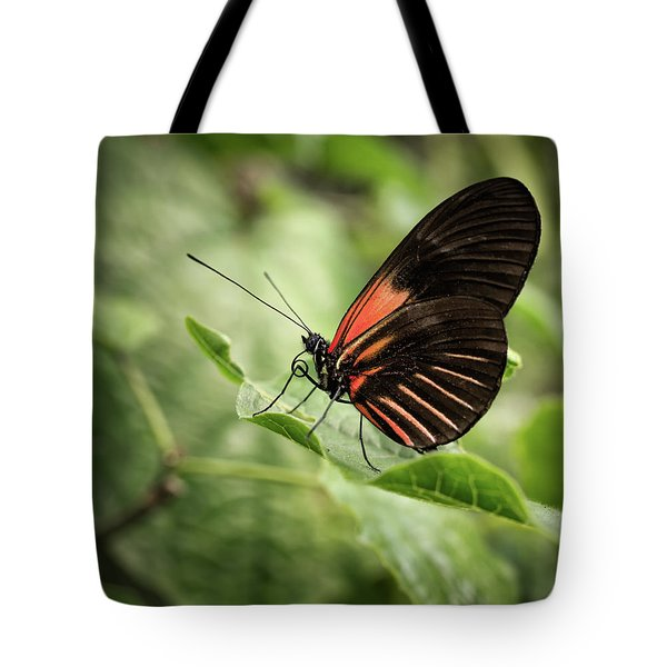 Wings Of The Tropics Butterfly Tote Bag