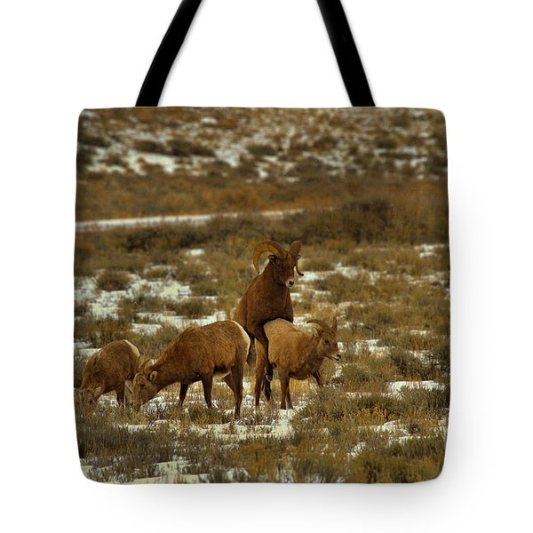 Winner Of The Rut Tote Bag