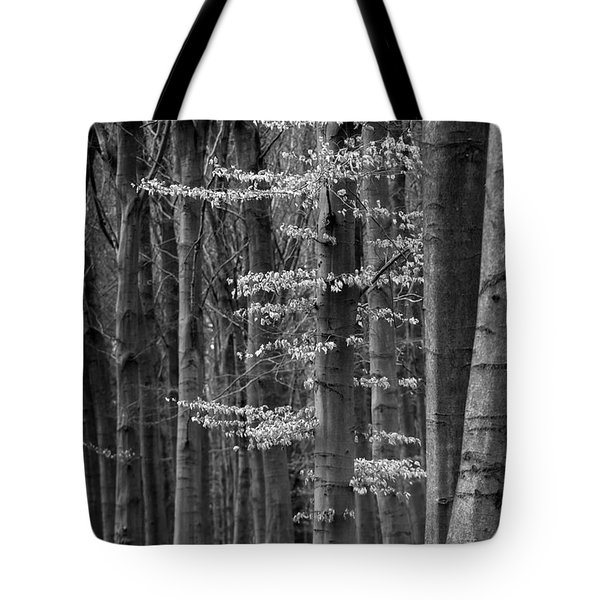 Winter Beech Tote Bag