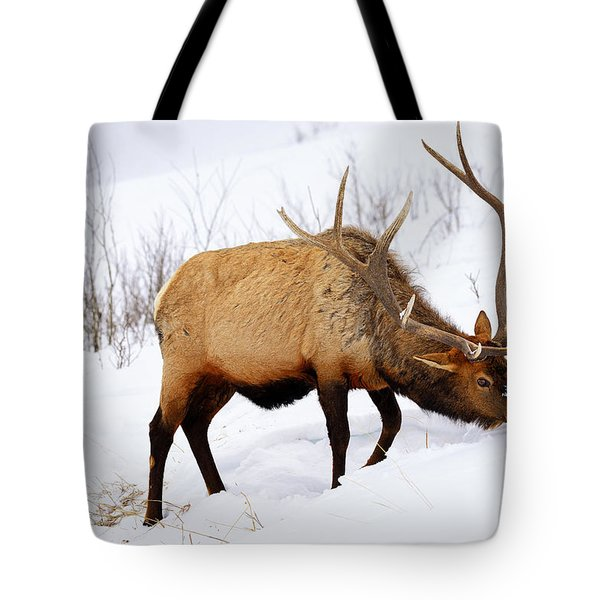 Tote Bag featuring the photograph Winter Bull by Greg Norrell