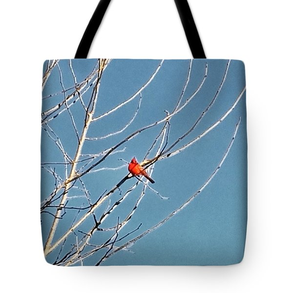 Tote Bag featuring the photograph Winter Cardinal  by Deb Martin-Webster