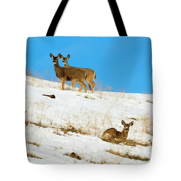 Tote Bag featuring the photograph Winter Deer by Mike Dawson