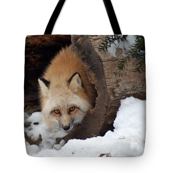 Winter Fox Tote Bag by Richard Bryce and Family