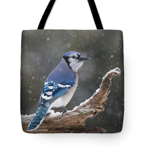 Tote Bag featuring the photograph Winter Jay by Mircea Costina Photography