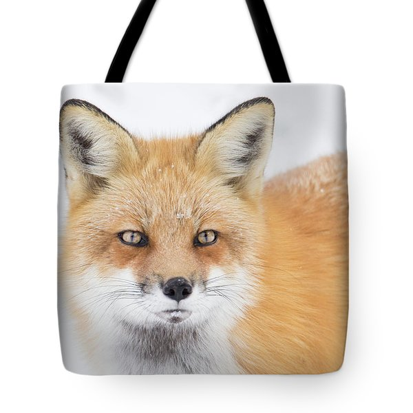 Tote Bag featuring the photograph Winter Portrait by Mircea Costina Photography