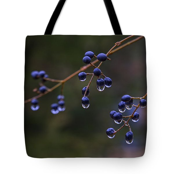 Winter Privet Tote Bag by Steve Gravano