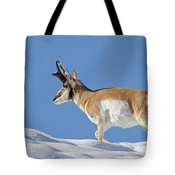 Winter Pronghorn Buck Tote Bag