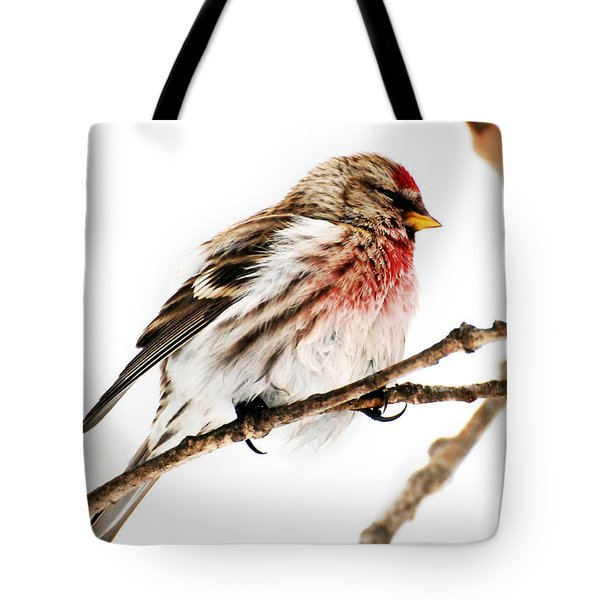Winter Redpoll Tote Bag by Christina Rollo